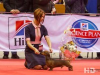 Formula Usprha Big Bang – CAC, CACIB, CH RKF, BOB, 1-Bestin Group, 4- BEST IN SHOW!