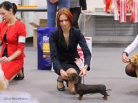 Formula Uspeha Pistol (KS) - Best Peppy, 3-Best in Show Puppy