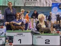 Formula Uspeha Nori - CAC, BOB, 1-Best in Group