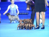 Formula Uspeha - Best Kennel in breed and in 6 Best in Show!
