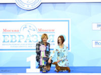 Formula Uspeha Raketa – Best Puppy, 1-Best in Show Puppy (65 puppies )