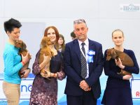 Formula Uspeha Orlandina – CAC, CACIB, CH RKF, CH Eurasia, BOB, Res.Best in Group