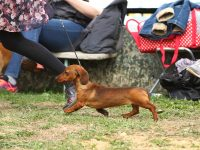 Formula Uspeha Solera Reserva - Best Puppy female