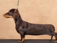 Formula Usphea Whirlwind -Clase Cachorros hembras , Muy Buena 1 / Mejor Cachorro de Raza / Mejor cachorro de Grupo IV !!