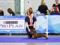Formula Uspeha Nori – CAC, R.CACIB - New Interchampion!