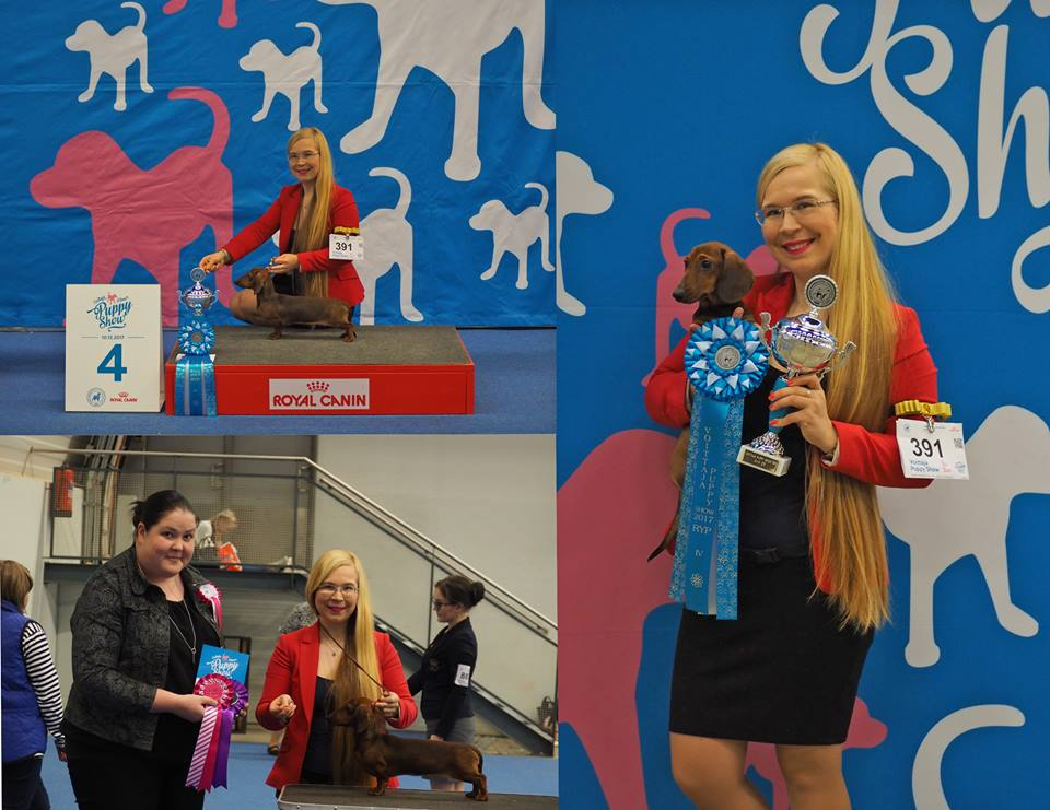 Formula Uspeha One Sweet Apple - Best Of Breed Puppy and BEST IN GROUP 4 again!