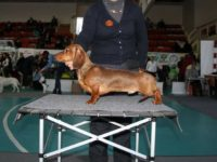 Formula Uspeha Maleficenta (ms)- 1cw, Club Winner, BOB, Best in Show-6.