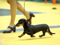 Formula Uspeha Jemchujina - Best Puppy