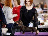 Formula Uspeha Fes (KS) - Best puppy, 1-Best in Show puppy!