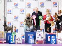 Formula Uspeha Solera Reserva (MS) – BOB, 1-Best in Group, 4-Best in Show!