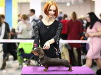 Formula Uspeha Fes (KS) - Best puppy, 1-BEST IN SHOW Puppy!!!