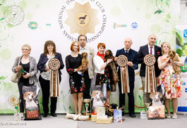 Moscow. Russian National Dachchund Championship Show