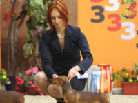 16.01.16. Moscow. Special Dachshund Show - Formula Uspeha Top Gear – Ю К Ч К, Best Junior, BOS, Res.Best in Show Junior