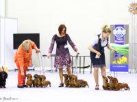 Formula Uspeha - 5-Best Kennel