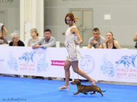 23-24.06.16. Moscow. Russia. World Dog Show - Formula Uspeha Top Gear - Best Junior (NDS) and 3 excellent (WDS)