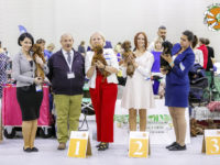 Formula Uspeha Harmony (MS) - Junior WUT Champion, Best Junior, 3-Best in Show Junior & Formula Uspeha Black Star (MS) - Best Veterav