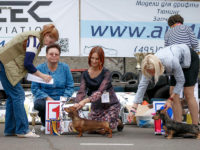 """03.09.16. Russia. Moscow. Dog Show """"Galaktika"""" - Formula Uspeha Top Gear - CAC, BOB, Best in Group, 3-Best in Show!!!"""