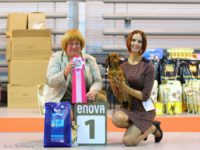 "26.11.16. Russia. Moscow. National Dog Show ""Fortuna"" - Formula Uspeha Top Gear - CAC, BOB, 1-Best in Group, 1-BEST IN SHOW!!!"