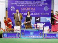 26.02.17. Minsk. Belorussia. International Dog Show- Formula Uspeha Top Gear (MS) - CAC, CACIB, BOB, 1-Best in Group, 4-Best in Show