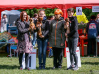 "28.05.2017 Russia, Moscow. National Dog Show ""Golgrayz"" - Formula Uspeha Top Gear (MS) - CAC, CH RKF, BOS"