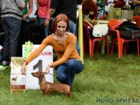 Formula Uspeha Karmen (ks) - Best puppy, 1-Best in Show Puppy!!!