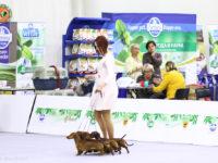 Formula Uspeha - 1-Best Kennel!!!