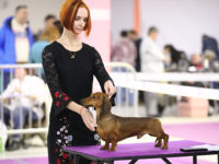 "18.02.2018 Moscow. Russia. National dog show ""Fauna"" - Formula Uspeha Top Gear (MS) - CAC, CH RKF, BOB, 1-Best in Group, 1-BEST IN SHOW!!!!"