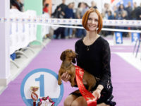 01.04.18. Russia. Moscow. Special Dachshund Show. - Formula Uspeha Top Gear (MS) - Club Winner, BOB, 3-Best in Show!!!