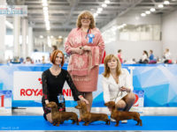 "05.05.2018. Russia. Moscow. International dog show ""Eurasia-1"" (5533 dogs) - Formula Uspeha Top Gear (MS) - CAC, CACIB, CH RKF, CH Eurasia, BOB, 1-Best in Group, New Interchampion!!"