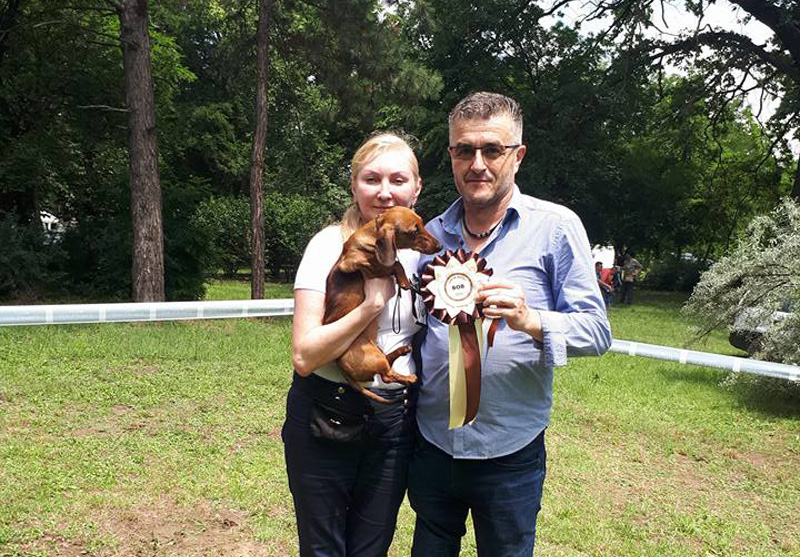 Formula Uspeha Solera Reserva (ms) - CAC, CACIB,BOB, SERBIAN CHAMPION, 3-Best in Group