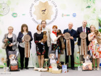 19.05.18. Russia. Moscow. Russian National Dachchund Championship Show (301 dachshunds) - Formula Uspeha Top Gear (MS) - Club Champion, Res.Best in Show!!!