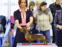 "15.11.15. Russia. Moscow. NDS ""Delta-PAL"" - Formula Usprha Top Gear (9.5 months) - J.CAC, Best Junior, BOB, 1-Best in Group!"