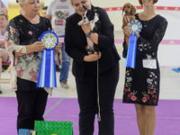 Formula Uspeha Charoit (ks) - Best Baby, Res.Best in show baby!!!