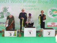 Formula Uspeha Fortuna - 1 CW (Working class), Res.Best in show Working Dog!