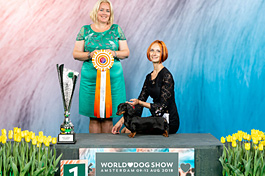 Niderland. World Dog Show & WUT World Winner Show & Benelux Winner