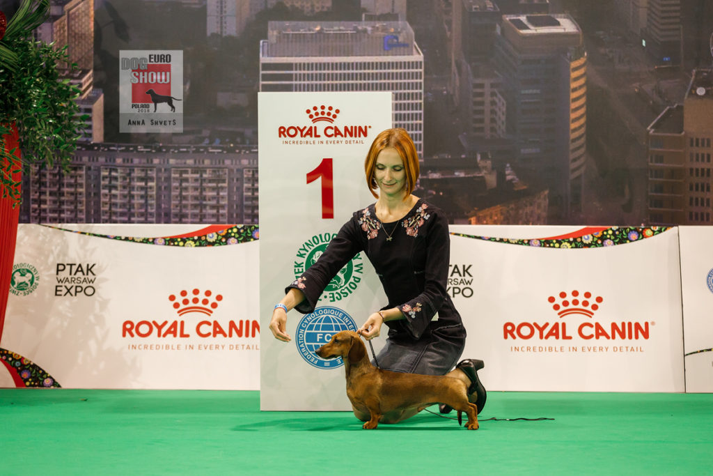 Formula Uspeha Top Gear (ms) - CAC, CACIB, BOS, EUROPEAN WINNER!!!