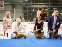 Formula Uspeha Top Gear (ms) - CAC, CACIB, BOS, EUROPEAN WINNER-2018