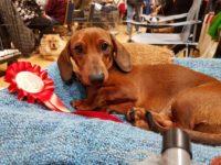 Formula Uspeha Style - Graduate 1st , A.V. Hound puppy 2nd