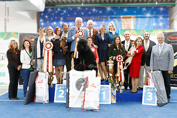 Formula Uspeha Top Gear (ms) - CAC, CH RKF, BOB, 1-Best in Group, Res.Best in Show!