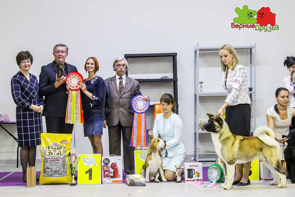 Formula Uspeha Peppy (ks) - JCAC, JBOB, BOB, RES.BEST IN SHOW JUNIOR, 1-BEST IN GROUP, 1-BEST IN SHOW!!!!!!!