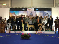 Formula Uspeha Top Gear (ms) - CAC, CACIB, BOB, 1-Best in Group, Roma Winner, Res.Best in Show!!!!!