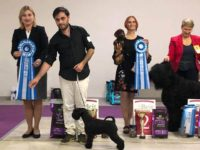 Formula Uspeha Pupa (MS) - JCAC, JBOB, BOB, 1-Best in Group, Res.Best in Show Junior, New Junior Champion of Russia!