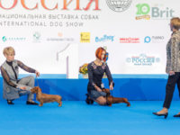 Formula Uspeha Raketa (KS) - CAC, CACIB, CH RKF, BOB, Res.Best in Group