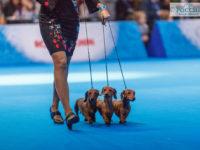 Formula Uspeha (kaninchen) - 3-Best Kennel