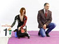 Formula Uspeha Jemzhujina (ks) - CAC, BOB, 1-BEST IN GROUP, RES.BEST IN SHOW!!!