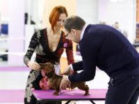 Formula Uspeha Maserati - Best puppy, Res.Best in Show Puppy!!!