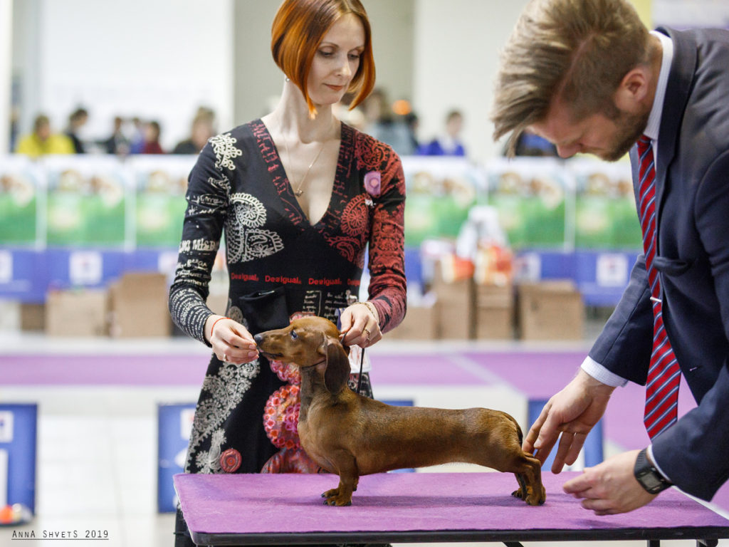 Formula Uspeha Raketa (ks) - Club Winner, BOB, 3-Best in Show