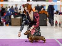 Formula Uspeha Maserati (Formula Uspeha Big Bang & Formula Uspeha Nori) (ks) - Best Puppy