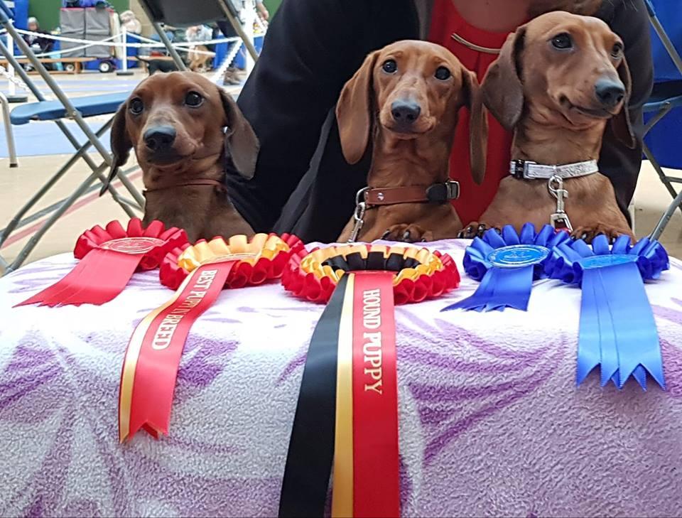 FORMULA USPEHA STYLE - AVNSC Post graduate 1st., BOB, HOUND puppy group 4!