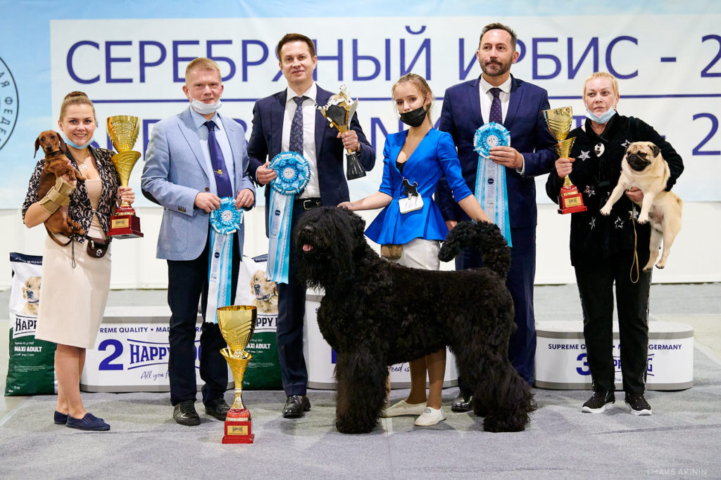 Formula Uspeha Solera Reserva (ms) - CAC, CACIB, CH RKF, BOB, 1-Best in Group, Res.Best in Show!!!